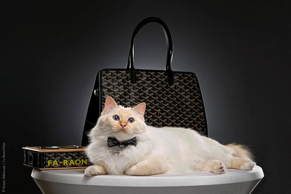lbp_gallery_cats_1200_fa_raon_bag