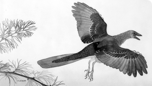 This image is of a artist impression of Archaeopteryx flying